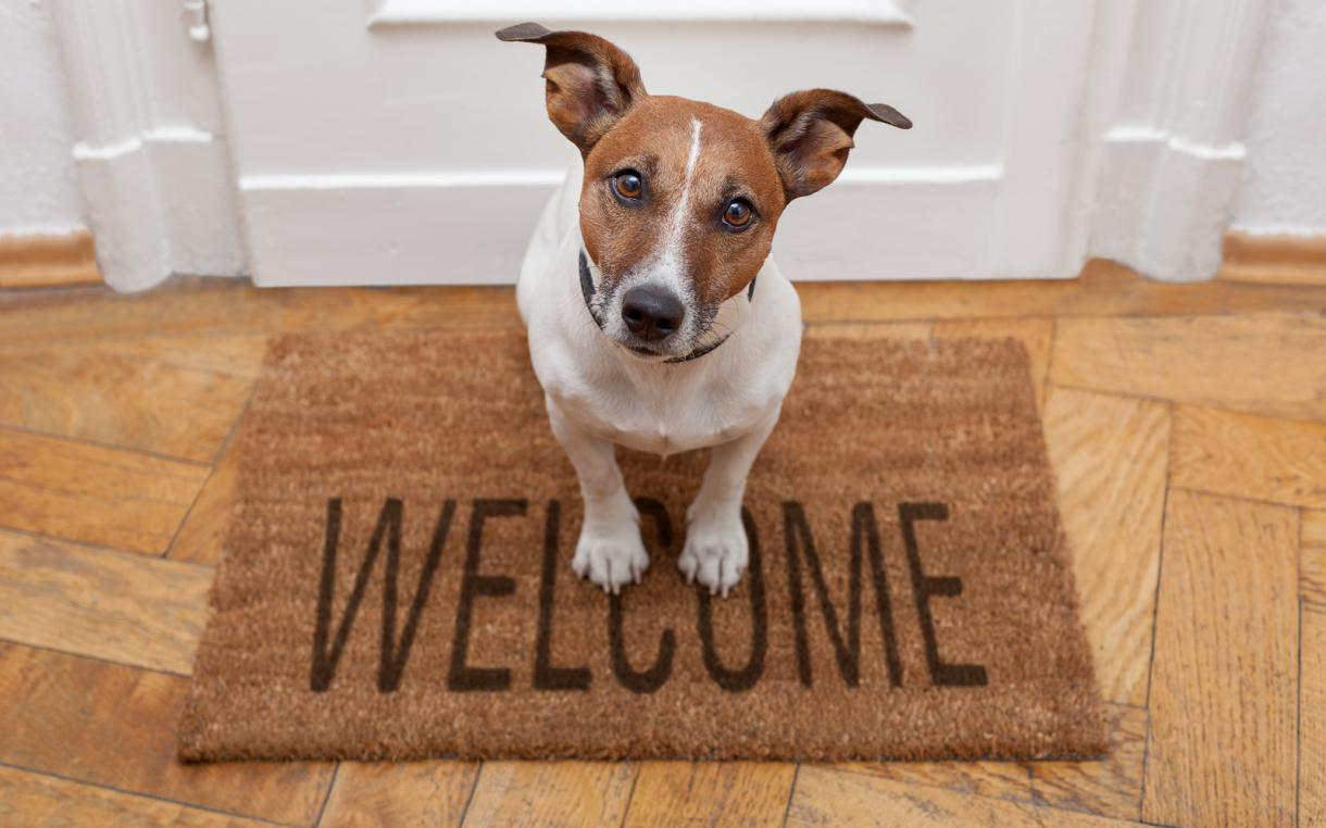 Do you allow your tenants' pets in your property?